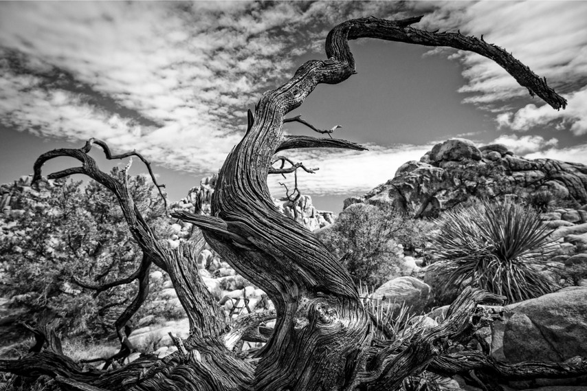 Afterlife at Joshua Tree
