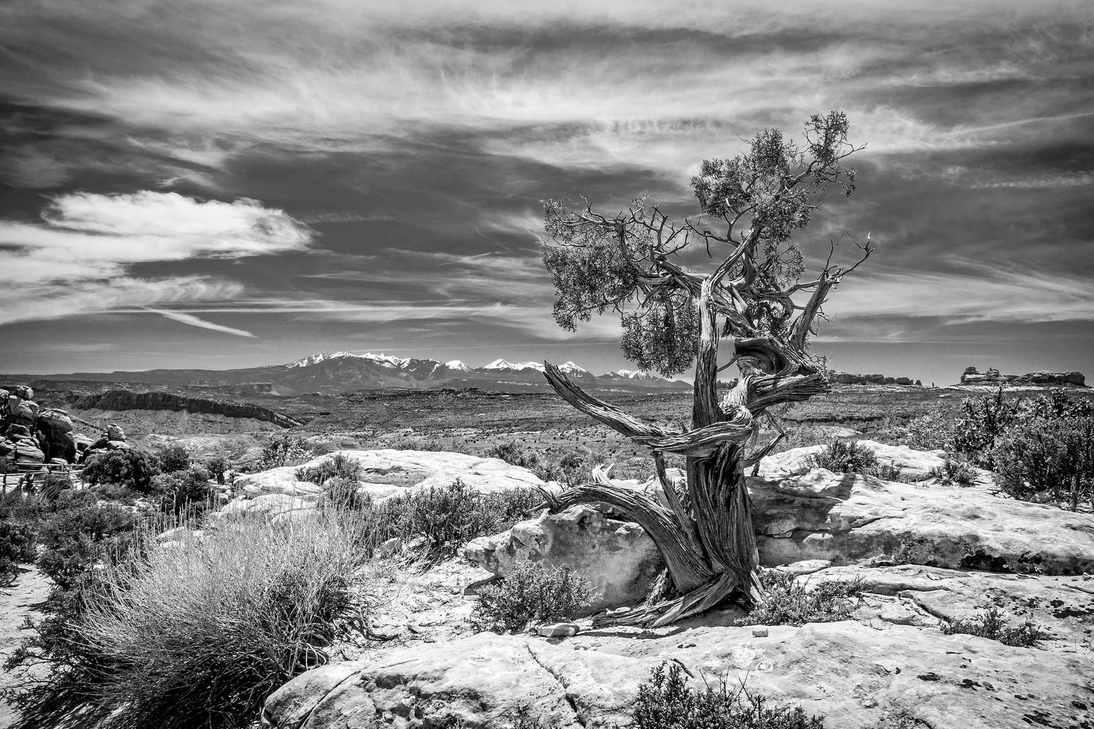 Utah Juniper View