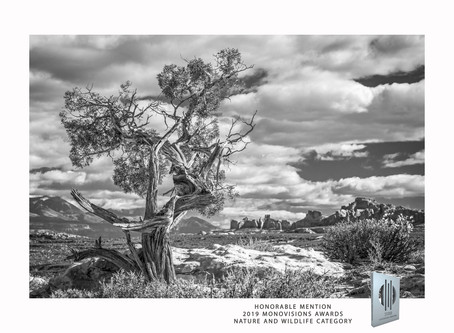 HONORABLE MENTION in 2019 Monovisions Awards Nature and Wildlife category
