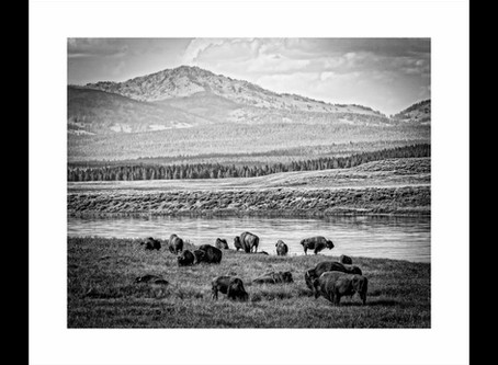 2019 Calgary Stampede Western Showcase Photo Gallery
