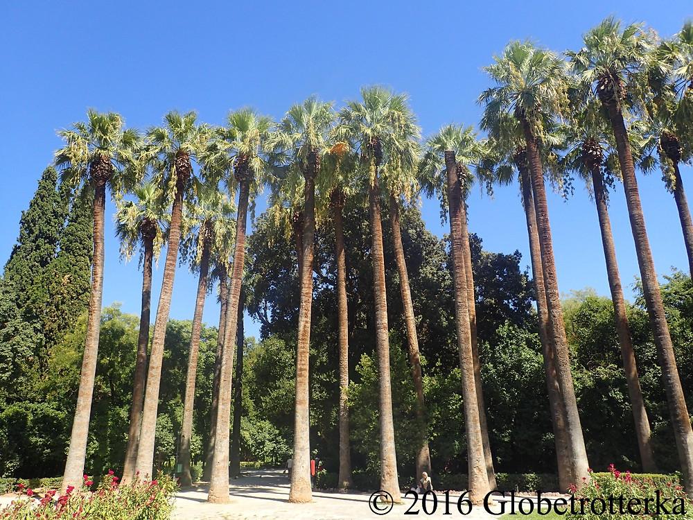 L'entrée des jardins nationaux d'Athènes et ses palmiers de 25 mètres. © 2016 Globetrotterka