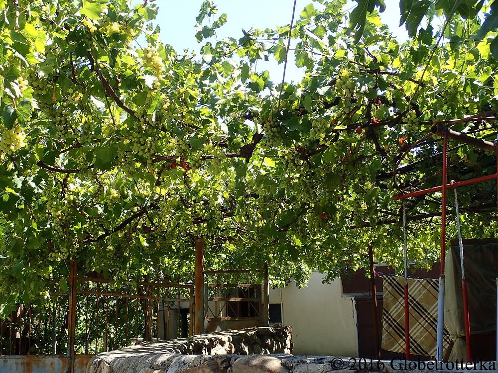 Jardins typiques de Sighnaghi, Géorgie © 2016 Globetrotterka