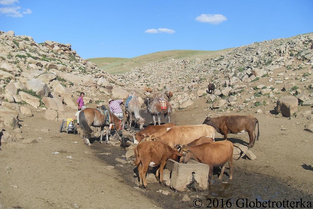 Une source d'eau où s'abreuvent chevaux, chameaux et vaches © 2016 Globetrotterka
