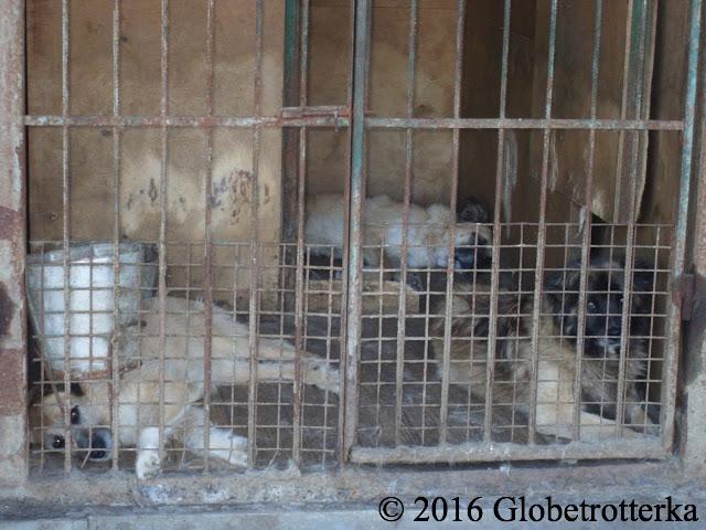 En moyenne une cage abrite 3 chiens. © 2016 Globetrotterka