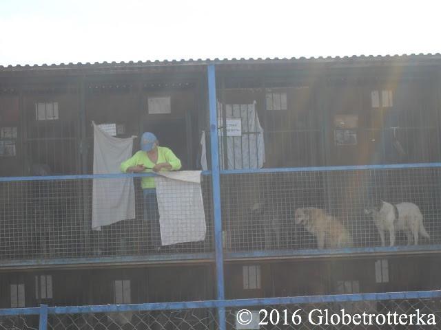 Une tutrice avec ses chiens. Ils attendent un nouvel aménagement de leur cage.