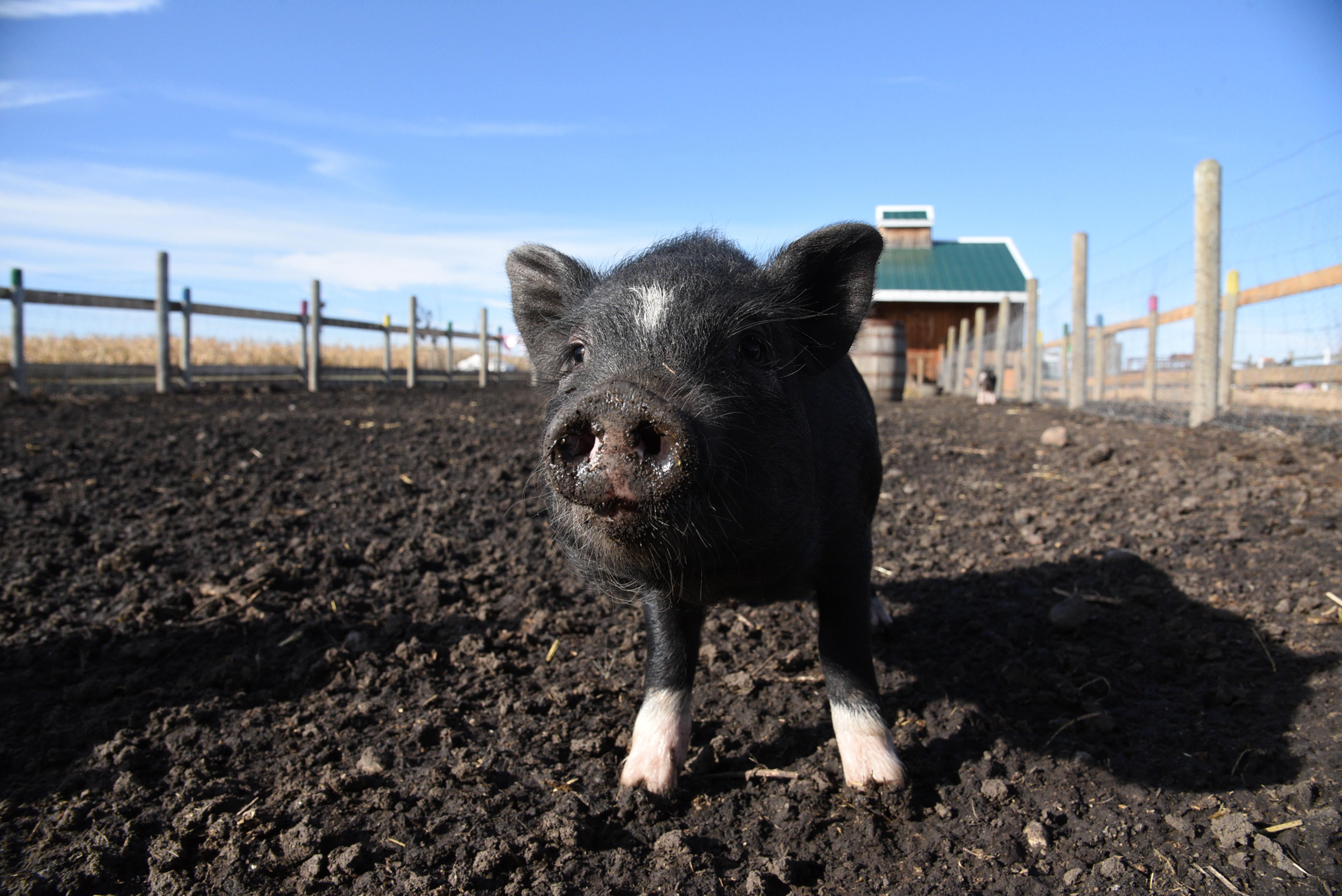 Calgary Farmyard