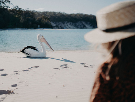 Life In Focus at The Cove Jervis Bay - The PERFECT family holiday destination!