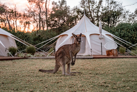 Glamping with roos
