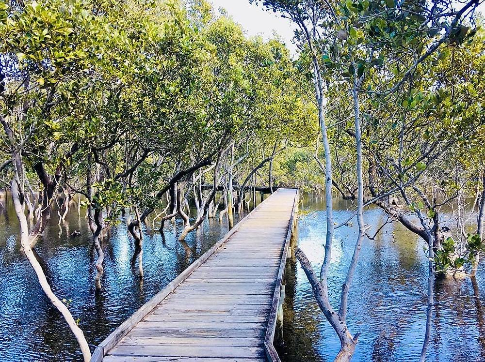 Mangrove Board Walk, Jervis Bay Maritime Museum - Image by @EssieFit87 via Instagram