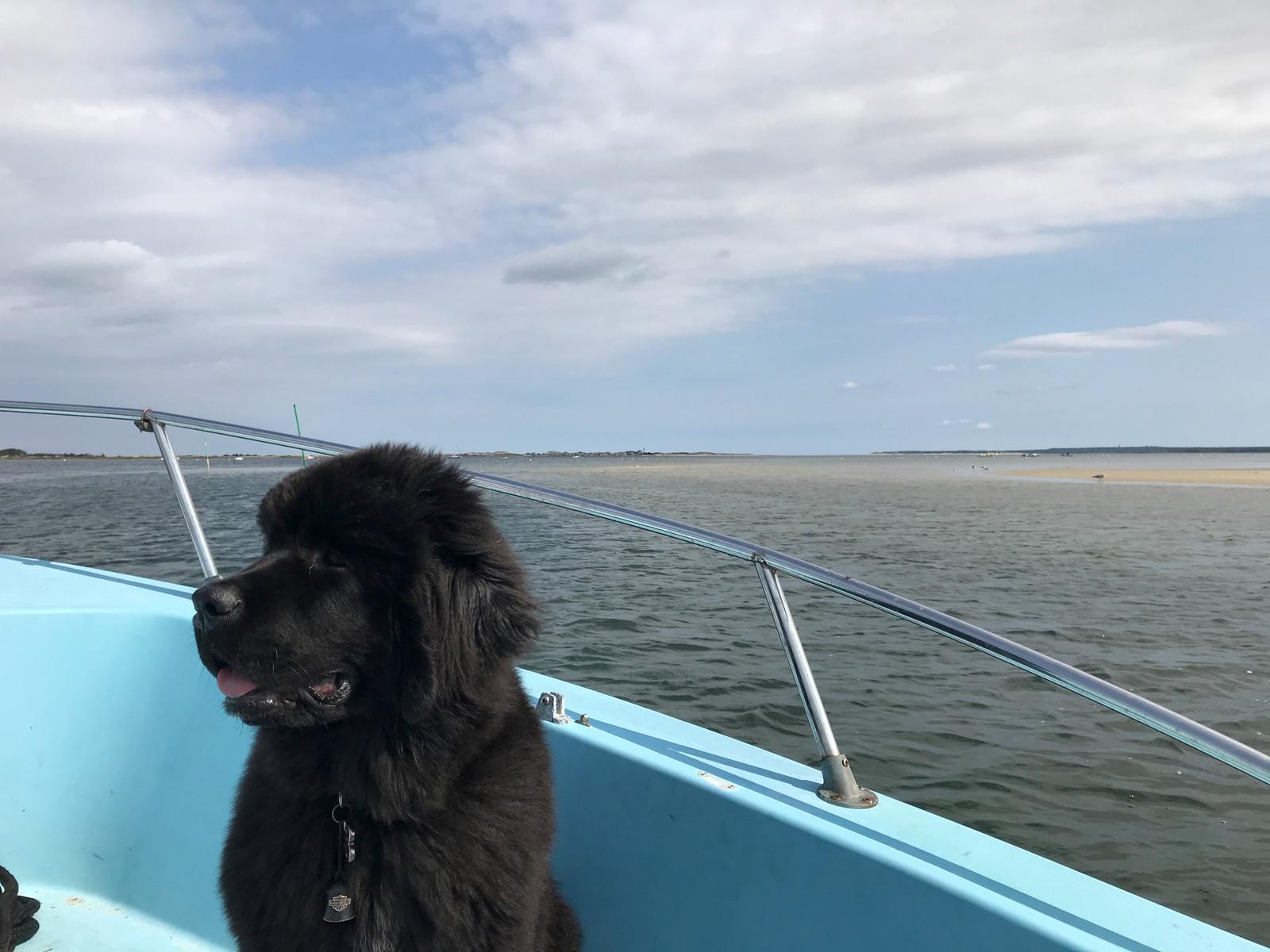 Cape Cod Boating Adventures, Family, private, private cruise