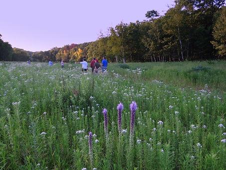 7 prairie in Pleasure Ridge preserve.JPG