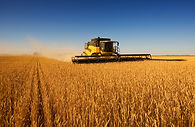 El trabajo de la cosecha