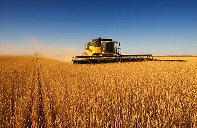 innhøsting Work