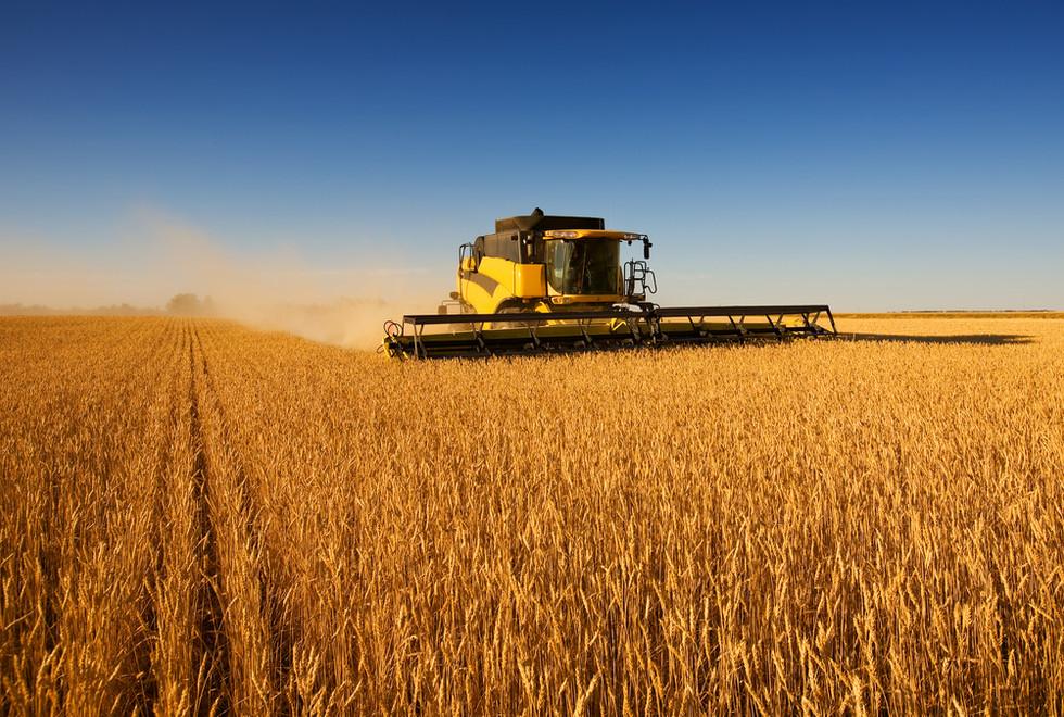 Harvest lavoro