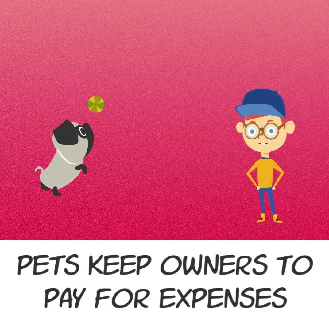 Pet Rescue