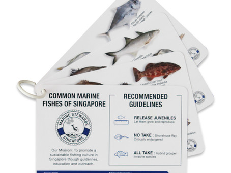 Singapore Fish ID cards