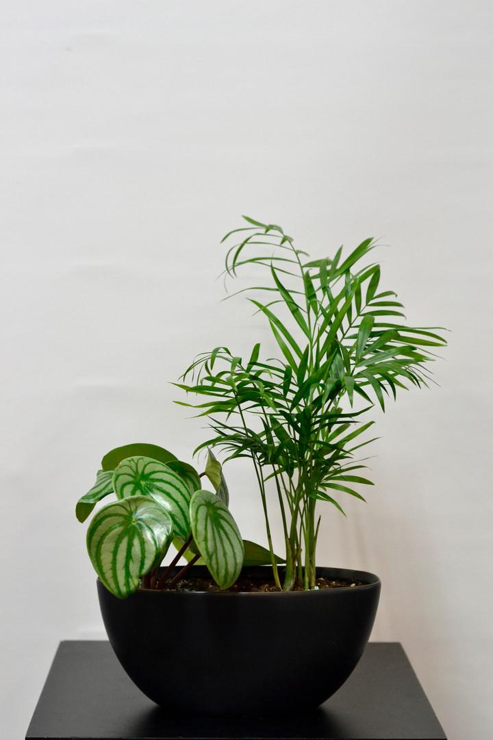 Arrangement de plantes 4