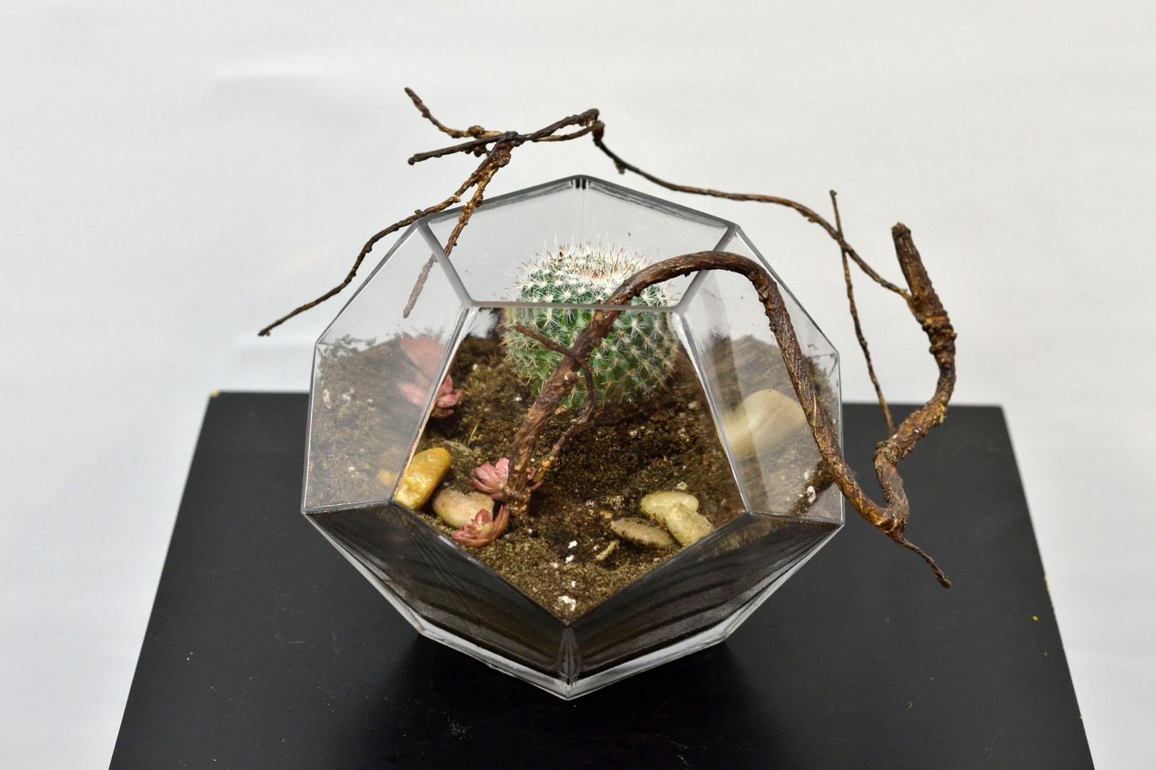 Cactus dans un beau vase transparent
