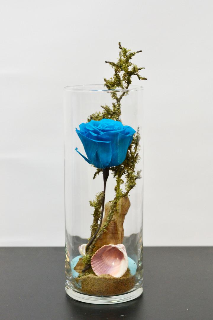 Rose éternelle 6