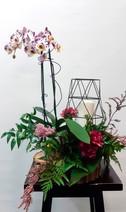 plante et lanterne 5