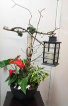 Arrangement de Plante et lanterne  1