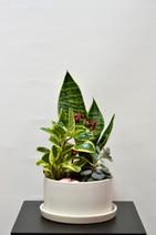 Arrangement de plantes 5