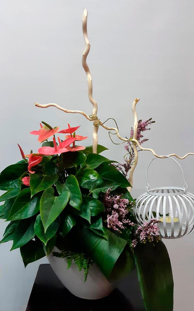 plante et  lanterne 6