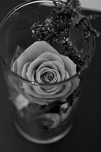rose_eternellenb.jpg
