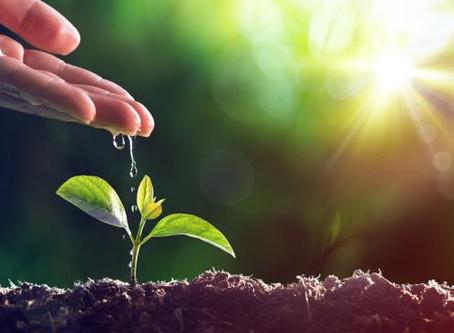 Journée internationale de l'environnement : nos actions éco-friendly pour un monde plus durable