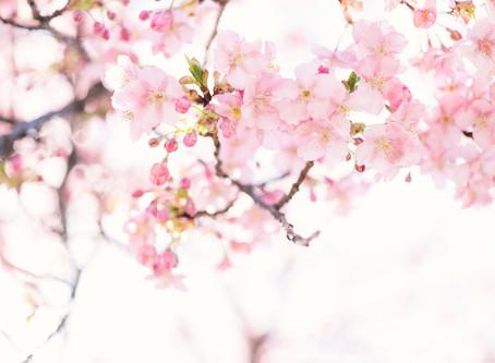 4 Conseils pour faire face aux allergies et problèmes de peau au Printemps