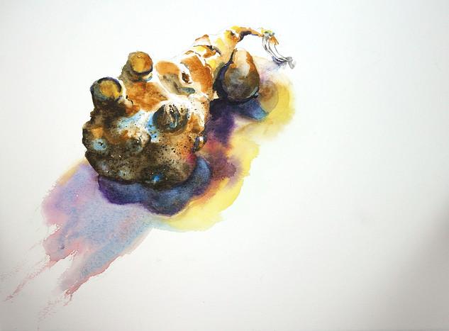 Jerusalem Artichoke 2