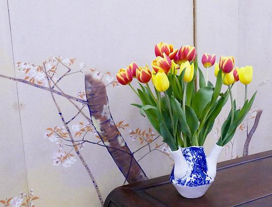 Laura Brodax, Cyclamens Tulipere