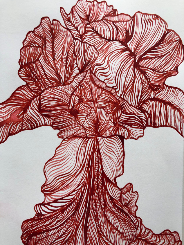 Iris in Red