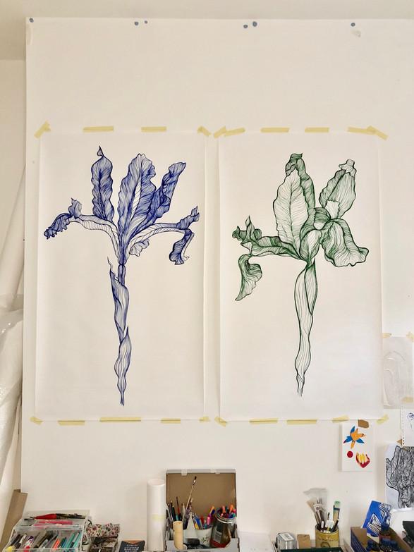 Iris Bulbosa Side by Side