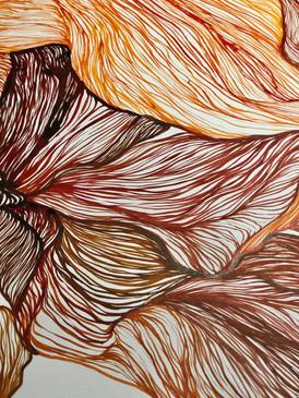 Autumn Iris Close-up
