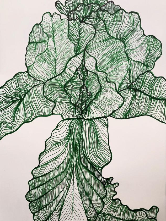 Iris in Green