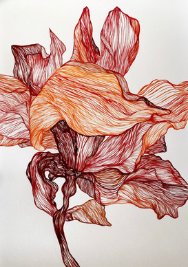 Autumn Iris