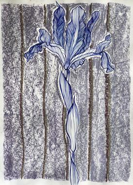 13. Preparatory Study with Chalk - Iris