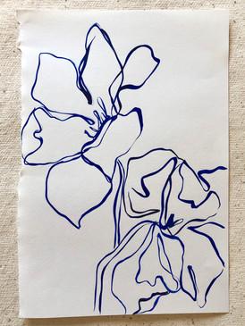 Tulip Study III