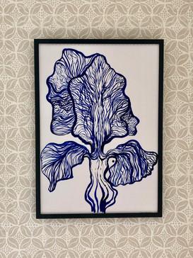 Iris I (in situ)