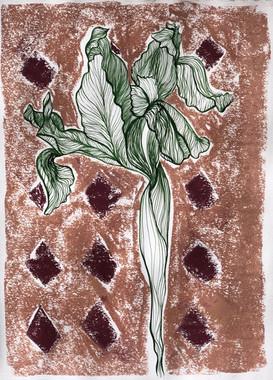 Preparatory Study with Chalk - Iris Bulbosa Flore Tuteo