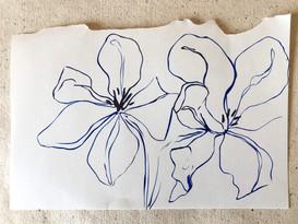 Tulip Study IV