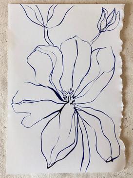 Tulip Study VII