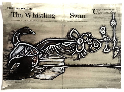 The Whistling Swan