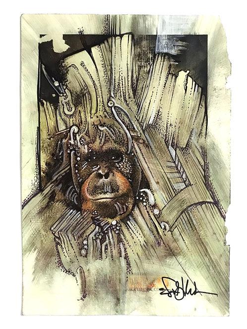 Wicked Looking Orangutan
