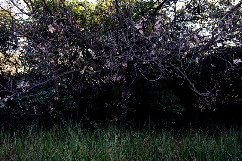 24 L'Ospite-Luna Coppola.jpg