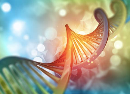 Not written in stone – how our lifestyle affects gene expression