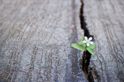 Cultivating meaning, resiliency and growth after trauma