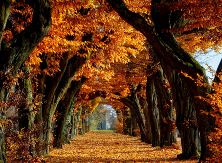 Autumn – time to let old habits and limiting beliefs fall away