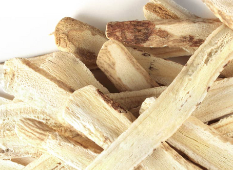 Astragalus – renowned immune booster and natural energy tonic